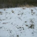 Meadow snow seen # 23-03-2013