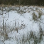 Meadow snow seen 23-03-2013