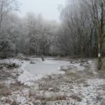 Pond_6-12-2010