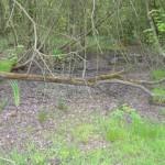 Pond__14th_May_2010__#4