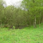 Pond__8th_May_2010___#3