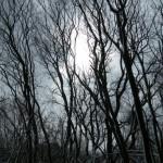 Winter Sun 23-03-2013