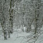 Woodland snow #5