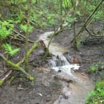 Stream in Flow 15-05-2013 #1