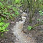 Stream in flow 15-05-2013 #2