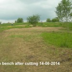 Area above bench after mowing 14-06-2014