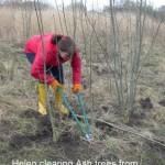 Helen, scrub Clearing 16-02-2014 #