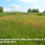 Top area above bench Before mowing 14-06-2014
