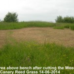 Top area above bench after mowing 14-06-2014