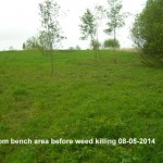 Up from bench area before weed killing 08-05-2014