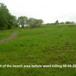Up left of Bench area before weed killing 08-05-2014