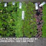 Plug Plants 11-05-2014