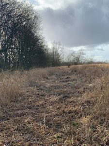 Cleared space for wildlife hedge